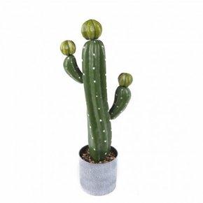 Cactus pot D12*47cm Cactus pot