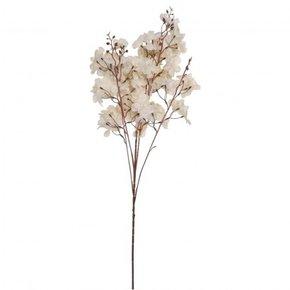 Sakura bush flower white,...